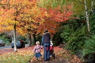 Seattle_trees_fall